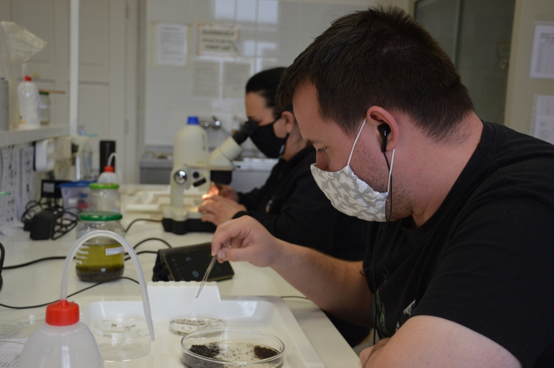 The WP2 team of UP will process all macroinvertebrate samples (up to 700 samples) from Europe. It is a time consuming and repetitive, but also an essential work for the DRYvER. Photos: A. Móra